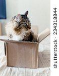 Stock photo cat sitting in a cardboard box 234318844