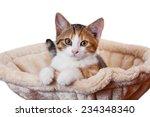 Stock photo portrait of nice kitten on isolated background 234348340