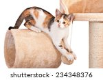 Stock photo portrait of nice kitten on isolated background 234348376