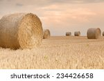 Bales Of Grain After Harvestin...