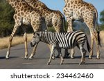 side angle view of the bodies... | Shutterstock . vector #234462460