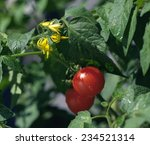 Cherry Tomatoes And Flowers
