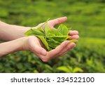 Female Hands Holding Fresh Tea...