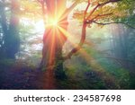 Stock photo alpine autumn scenic sunrise in the beautiful carpathian forest after rain shining colors and the 234587698