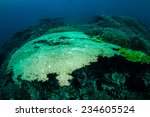 Small photo of Various hard coral reefs in Banda, Indonesia underwater photo. There are bunch of hard coral Acropora cervicornis and Acropora hyacinthus.