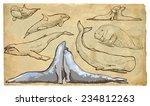 sea mammals. collection of an... | Shutterstock .eps vector #234812263