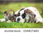 Stock photo saint bernard puppy with three little kittens 234827683
