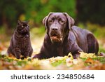 Stock photo brown dog and cat outdoors together 234850684