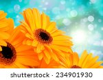 orange gerber flowers on color... | Shutterstock . vector #234901930