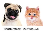 Stock photo funny pug dog and little red kitten isolated on white 234936868