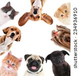 Stock photo collage of cute pets isolated on white 234936910
