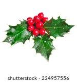 Holly christmas decoration....