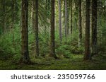 view inside of the forest on... | Shutterstock . vector #235059766