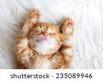 cute little red kitten sleeps... | Shutterstock . vector #235089946