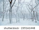Winter Landscape. Snowfall In...