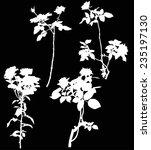illustration with white rose...   Shutterstock .eps vector #235197130