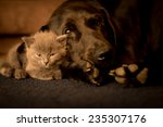 Stock photo large dog and a small cat sleep together 235307176