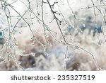 Frosted Bare Tree Branch In...