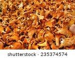 Golden Chanterelle Fungus Or...
