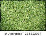 green grass with weed texture... | Shutterstock . vector #235613014