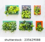 Decorated Wall Vertical Garden...