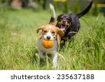 Two Dogs Chasing A Ball