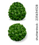 two round bush decorative plant ... | Shutterstock .eps vector #235654528