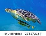 sea turtle | Shutterstock . vector #235673164