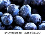 grape and water drops | Shutterstock . vector #235698100