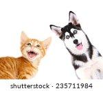 little red kitten and  husky... | Shutterstock . vector #235711984