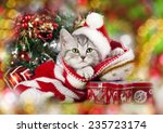 Kitten Christmas Wearing Santa...