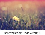 daisy flowers   Shutterstock . vector #235739848