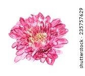 watercolor image of flower of... | Shutterstock .eps vector #235757629