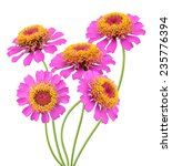 Flower Branch  Pink Zinnia...
