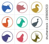 Set of meat animals icons with animals heads in profile. Vector collection made in retro style. Logos, badges and design elements