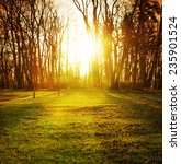 sunlight in the green forest ... | Shutterstock . vector #235901524