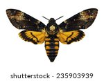 death's head hawkmoth isolated | Shutterstock . vector #235903939