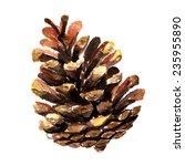 Watercolor Image Of Fir Cone On ...