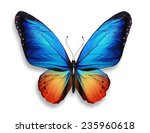 Stock photo color butterfly isolated on white background 235960618