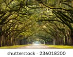 a stunning  long path lined... | Shutterstock . vector #236018200