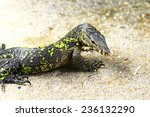 water monitor lizard | Shutterstock . vector #236132290