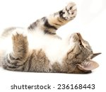 Stock photo cat plays on a white background 236168443