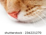 Close Up Of A Cat's Muzzle On ...
