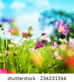 beautiful garden flowers  | Shutterstock . vector #236231566