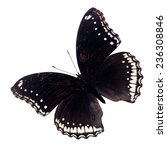 A Deep Black Butterfly With...