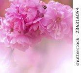 peach flowers | Shutterstock . vector #236316094