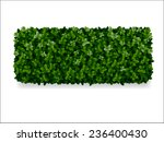 Rectangular Boxwood Shrubs ...