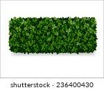 rectangular boxwood shrubs ... | Shutterstock .eps vector #236400430