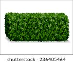 Boxwood Hedges Ortho ...