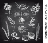 vector hand drawn set with... | Shutterstock .eps vector #236492716